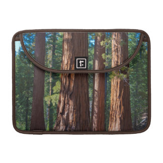 USA, California. Redwood Tree Trunks, Mariposa MacBook Pro Sleeve