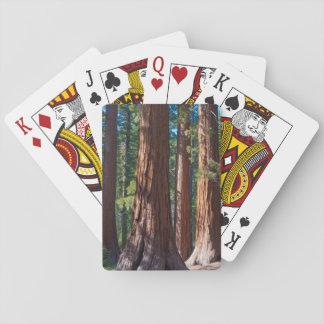 USA, California. Redwood Tree Trunks, Mariposa Playing Cards