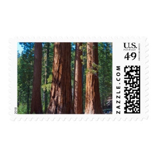 USA, California. Redwood Tree Trunks, Mariposa Postage