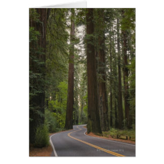 USA, California, road through Redwood forest 2 Card
