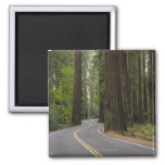 USA, California, road through Redwood forest 2 Inch Square Magnet