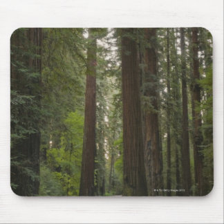 USA California road through Redwood forest 2 Mouse Pads