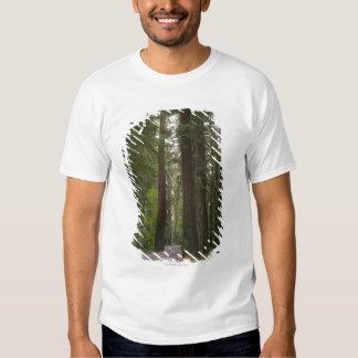 USA, California, road through Redwood forest 2 T-Shirt