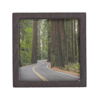 USA, California, road through Redwood forest Keepsake Box
