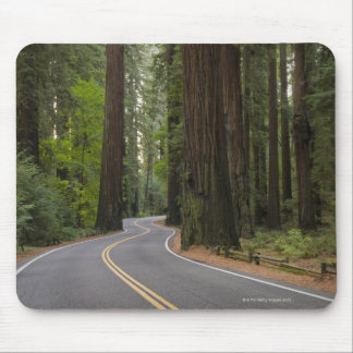 USA California road through Redwood forest Mousepads