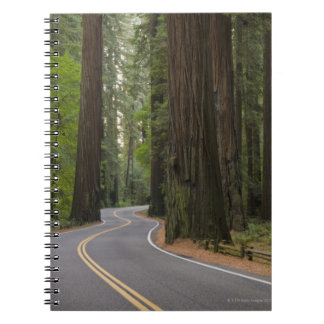 USA, California, road through Redwood forest Notebook