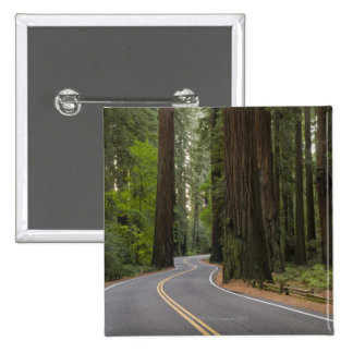 USA, California, road through Redwood forest Pinback Button