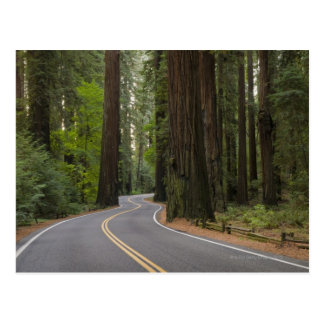 USA, California, road through Redwood forest Postcard