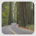 USA, California, road through Redwood forest Square Sticker