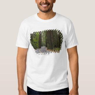 USA, California, road through Redwood forest T-Shirt