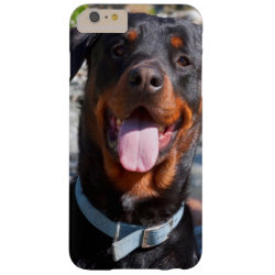USA, California. Rottweiler Smiling Barely There iPhone 6 Plus Case