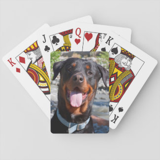 USA, California. Rottweiler Smiling Playing Cards