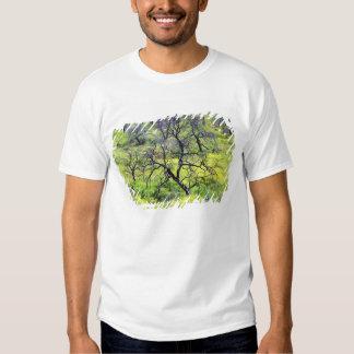USA, California, San Diego. A burnt oak forest Tshirts