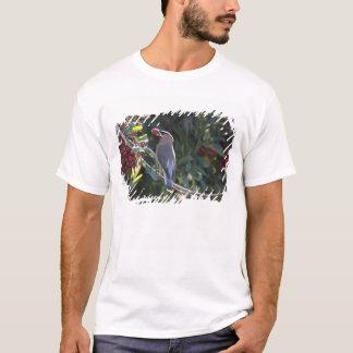 USA - California - San Diego - Cedar Waxwing T-Shirt