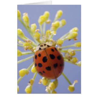 USA, California, San Diego, Close-up of a lady Greeting Cards