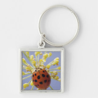 USA, California, San Diego, Close-up of a lady Keychains