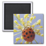 USA, California, San Diego, Close-up of a lady Fridge Magnets