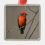 USA - California - San Diego County - Christmas Tree Ornaments