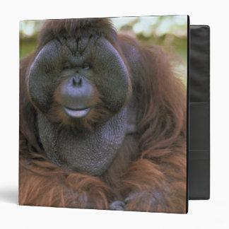 USA, California, San Diego Zoo. Captive Binder