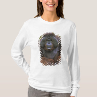 USA, California, San Diego Zoo. Captive T-Shirt
