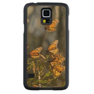USA, California, San Luis Obispo County. Monarch Carved® Maple Galaxy S5 Case