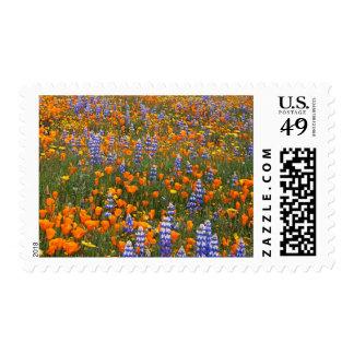 USA, California, Santa Margarita, Avenales Postage