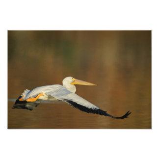 USA California Santee Lakes Park White Photo Print