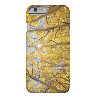 USA, California, Sierra Nevada Mountains. Fall Barely There iPhone 6 Case