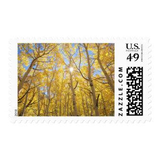 USA, California, Sierra Nevada Mountains. Fall Postage