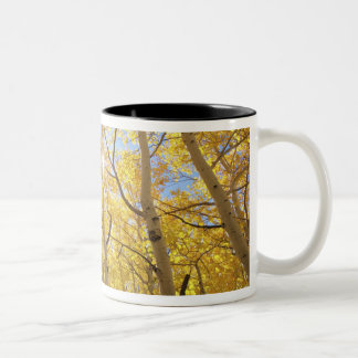 USA, California, Sierra Nevada Mountains. Fall Two-Tone Coffee Mug