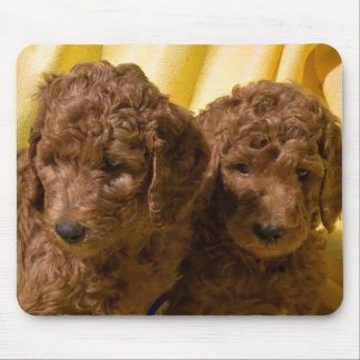 USA, California. Standard Poodle Puppies Mouse Pad