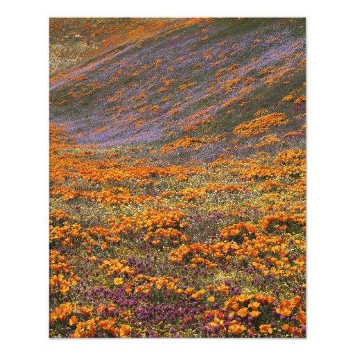 USA, California, Tehachapi Mountains, 2 Photographic Print