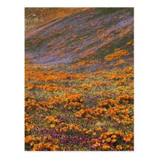 USA California Tehachapi Mountains 2 Post Card