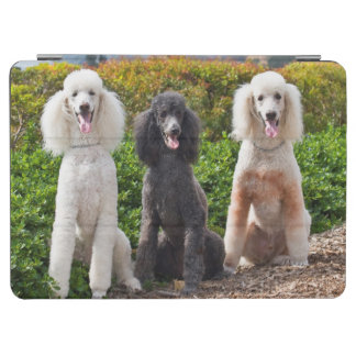 USA, California. Three Standard Poodles Sitting 2 iPad Air Cover
