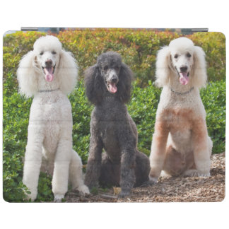 USA, California. Three Standard Poodles Sitting 2 iPad Cover