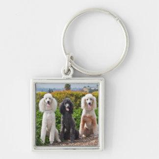 USA, California. Three Standard Poodles Sitting 2 Keychain