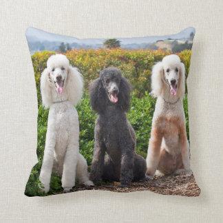 USA, California. Three Standard Poodles Sitting 2 Throw Pillow