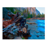 USA, California. Tree Roots In Merced River Postcards