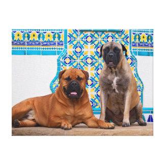 USA, California. Two Mastiffs Looking At You Canvas Print