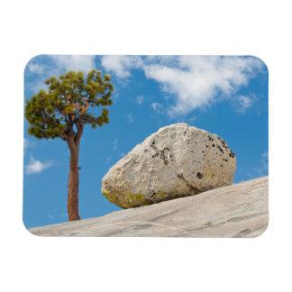 USA, California, Yosemite National Park. Pine Magnet