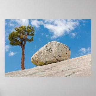 USA, California, Yosemite National Park. Pine Poster