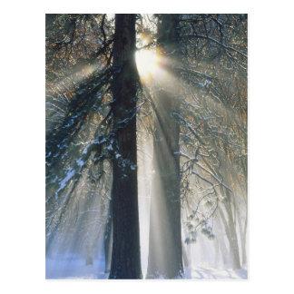 USA, California, Yosemite National Park, Sun Post Cards