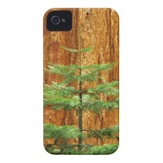 USA, California, Yosemite National Park. Young iPhone 4 Case