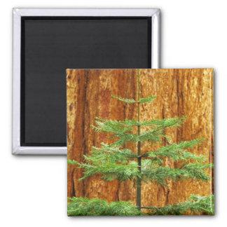 USA California Yosemite National Park Young Fridge Magnet