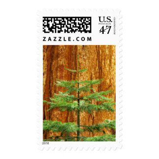 USA, California, Yosemite National Park. Young Postage