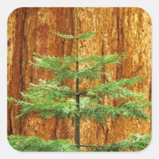 USA, California, Yosemite National Park. Young Square Sticker