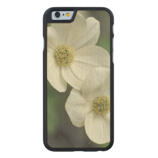 USA, California, Yosemite NP, along Merced Carved® Maple iPhone 6 Case