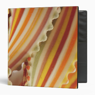 USA. Close-up of dried rainbow pasta noodles. Binder