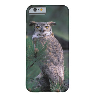 USA, CO, Colorado Springs. Great Horned Owl in Barely There iPhone 6 Case