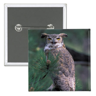 USA, CO, Colorado Springs. Great Horned Owl in Button